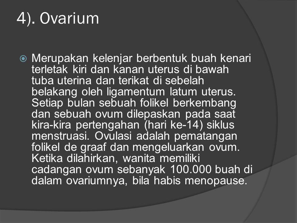 4). Ovarium