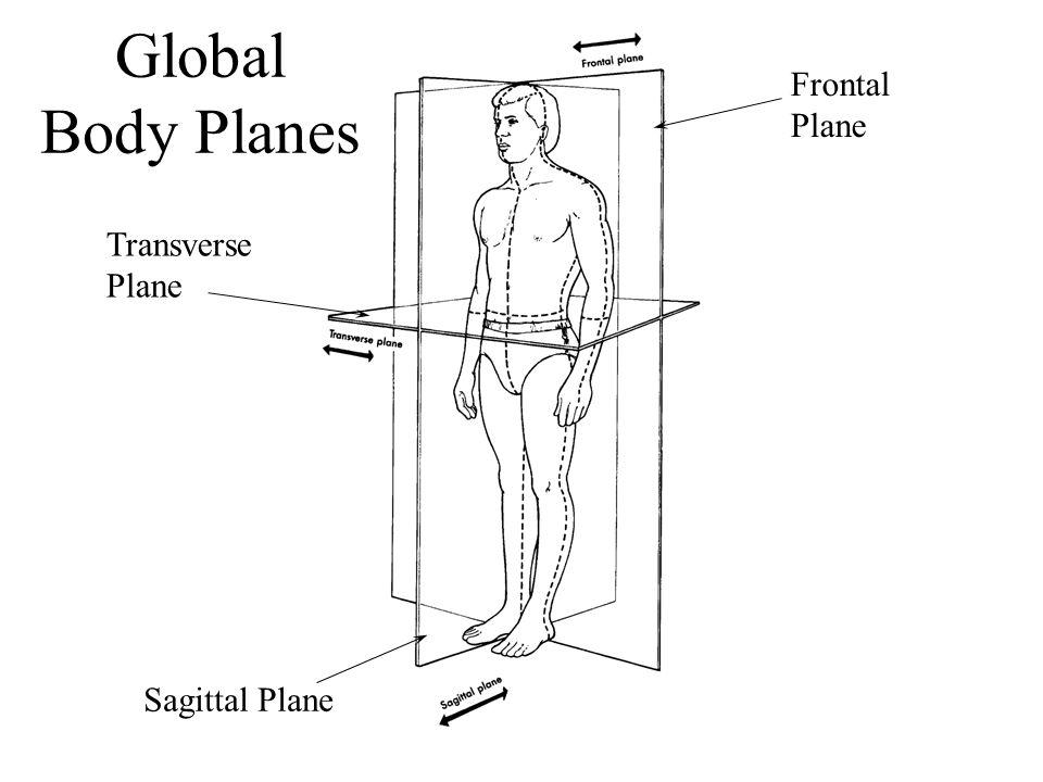 Global Body Planes Frontal Plane Transverse Plane Sagittal Plane