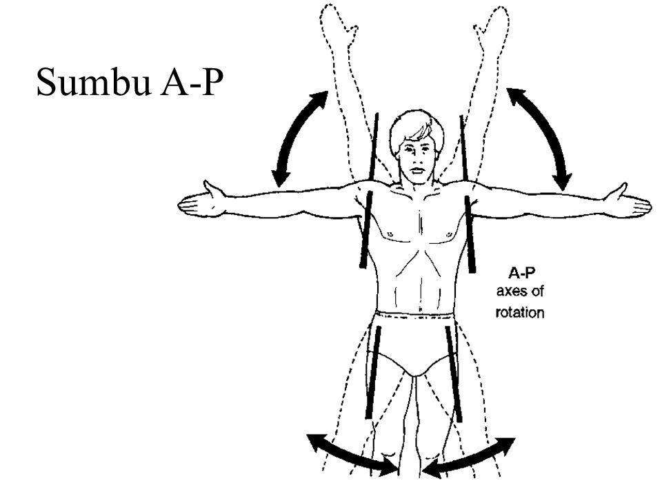 Sumbu A-P