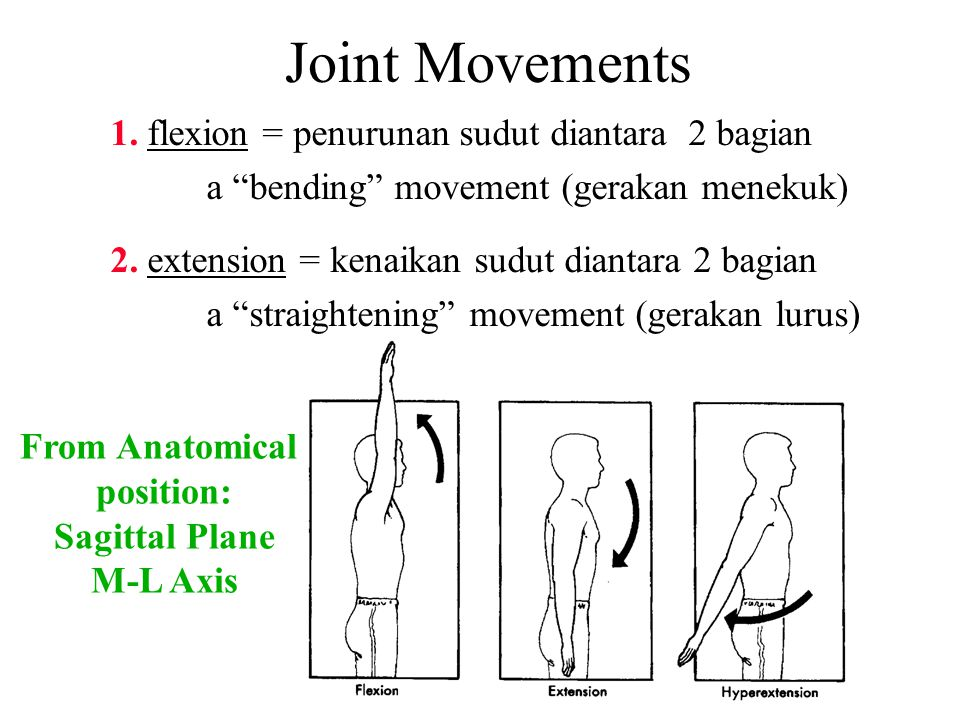Joint Movements 1. flexion = penurunan sudut diantara 2 bagian