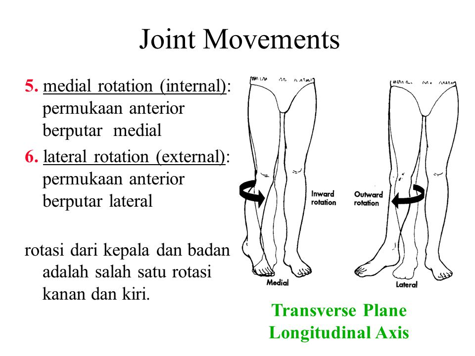 Joint Movements 5. medial rotation (internal): permukaan anterior berputar medial.