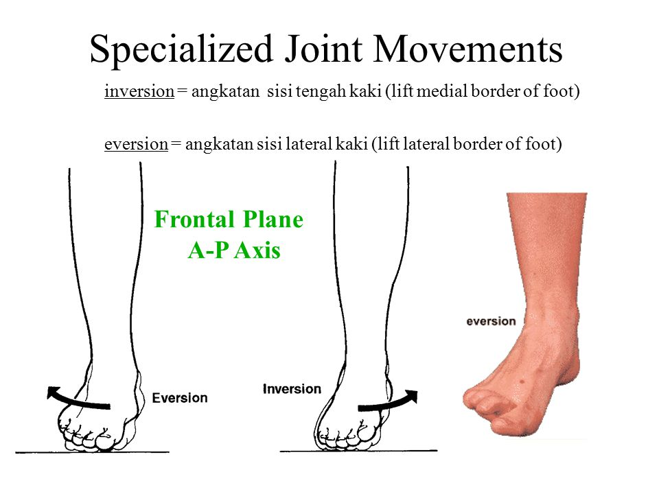 Specialized Joint Movements