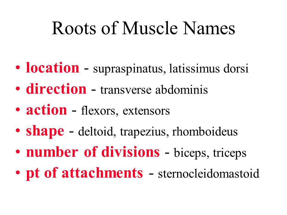 Roots of Muscle Names location - supraspinatus, latissimus dorsi