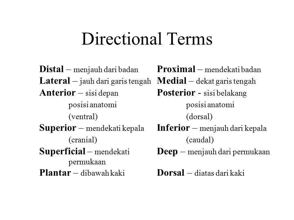 Directional Terms Distal – menjauh dari badan Proximal – mendekati badan. Lateral – jauh dari garis tengah Medial – dekat garis tengah.