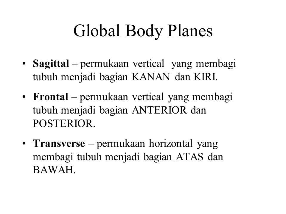 Global Body Planes Sagittal – permukaan vertical yang membagi tubuh menjadi bagian KANAN dan KIRI.