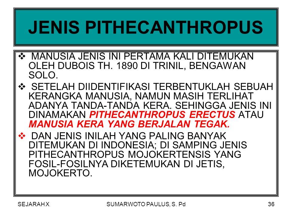 JENIS PITHECANTHROPUS