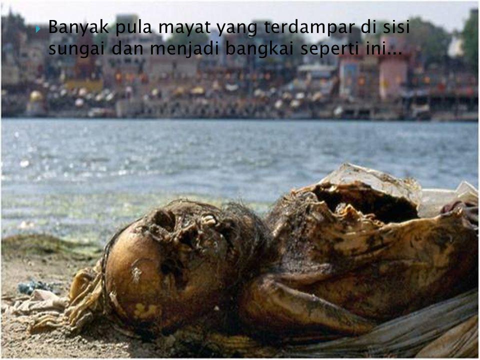 Banyak pula mayat yang terdampar di sisi sungai dan menjadi bangkai seperti ini...