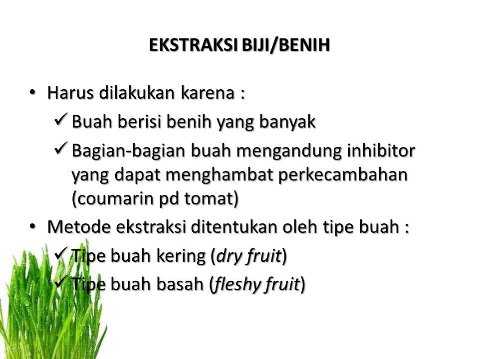 EKSTRAKSI BIJI/BENIH Harus dilakukan karena : Buah berisi benih yang banyak.
