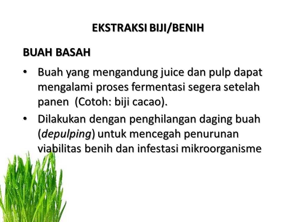 EKSTRAKSI BIJI/BENIH BUAH BASAH. Buah yang mengandung juice dan pulp dapat mengalami proses fermentasi segera setelah panen (Cotoh: biji cacao).