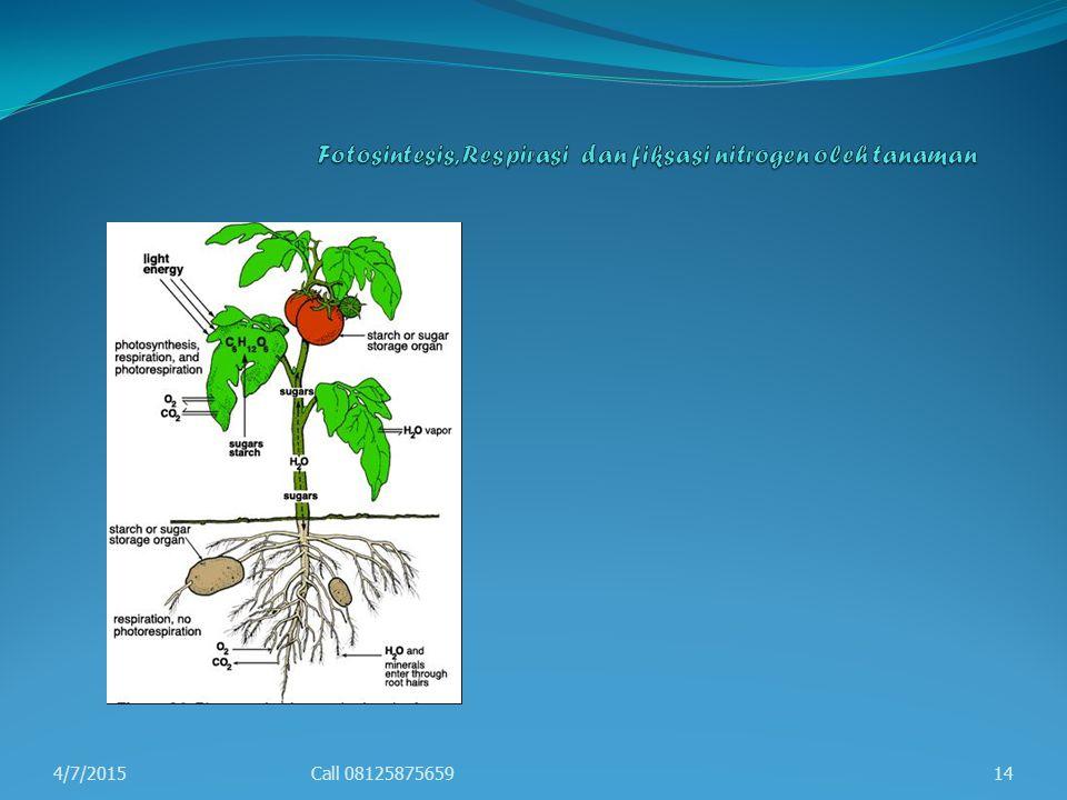Fotosintesis, Respirasi dan fiksasi nitrogen oleh tanaman
