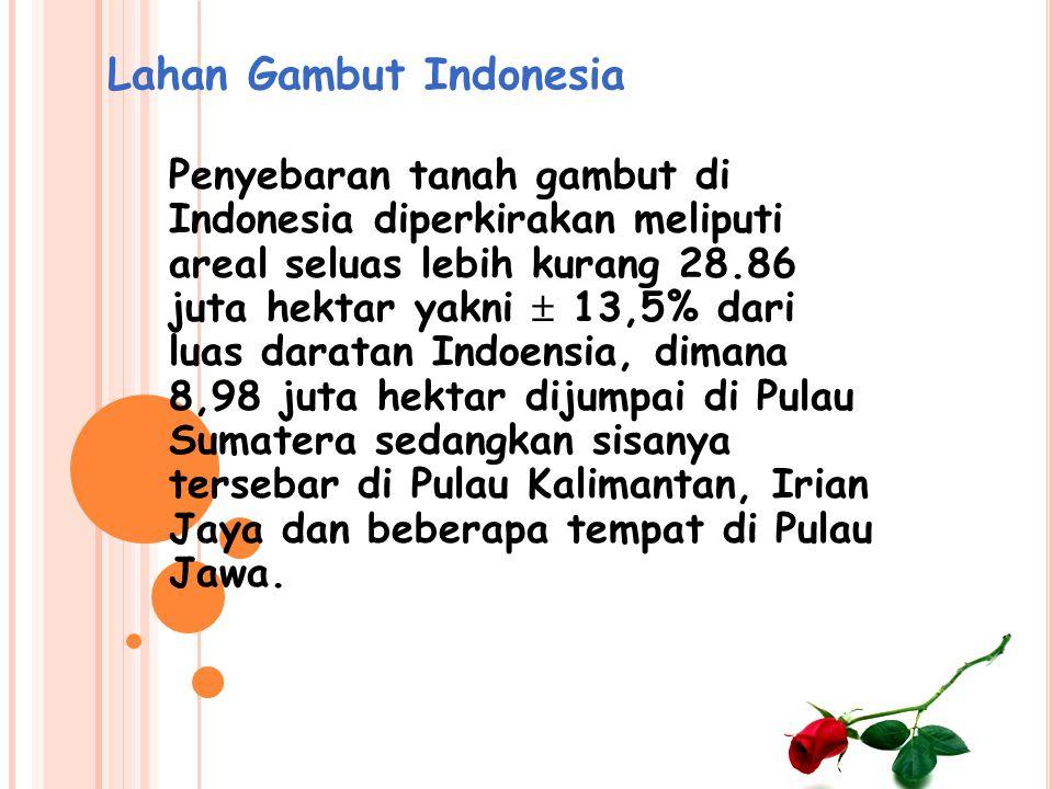 Lahan Gambut Indonesia