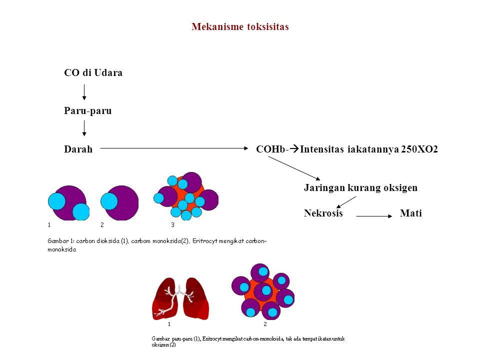 Mekanisme toksisitas CO di Udara. Paru-paru. Darah COHb-Intensitas iakatannya 250XO2. Jaringan kurang oksigen.