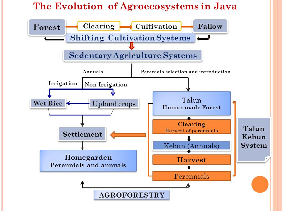 The Evolution of Agroecosystems in Java