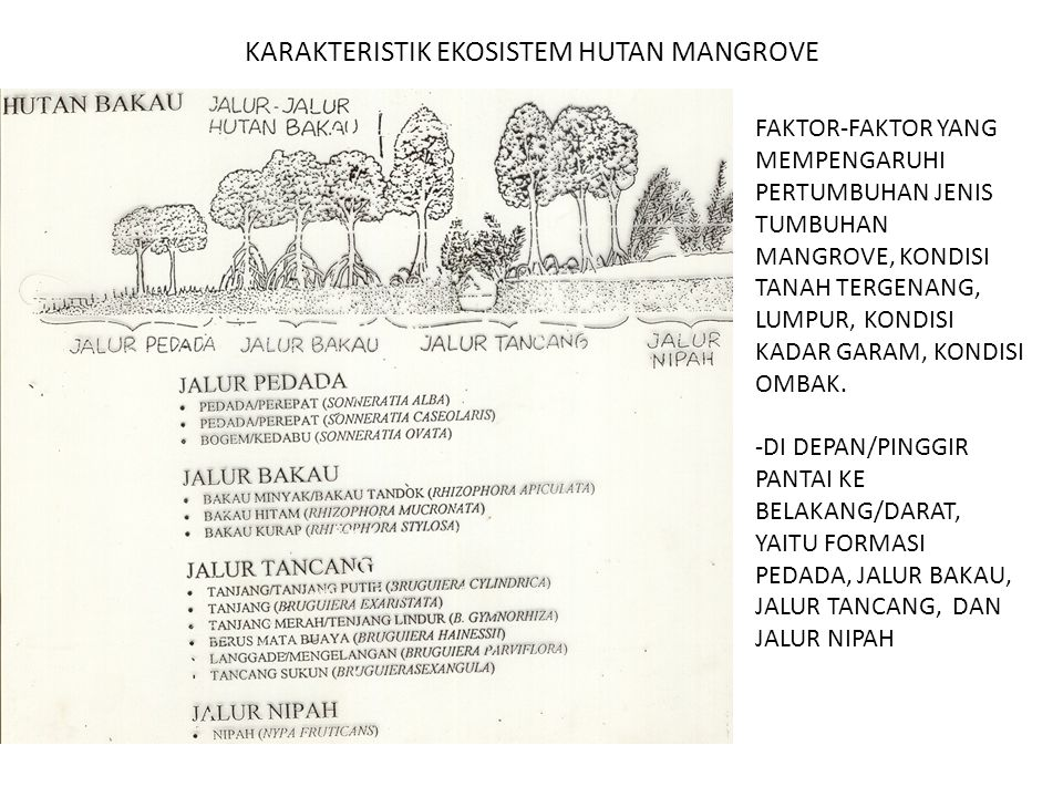 KARAKTERISTIK EKOSISTEM HUTAN MANGROVE
