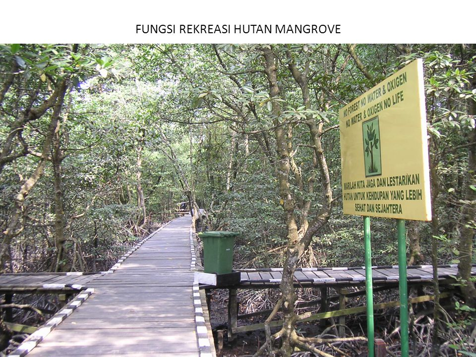 FUNGSI REKREASI HUTAN MANGROVE