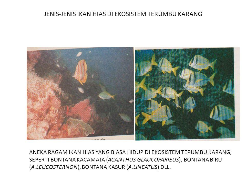 JENIS-JENIS IKAN HIAS DI EKOSISTEM TERUMBU KARANG