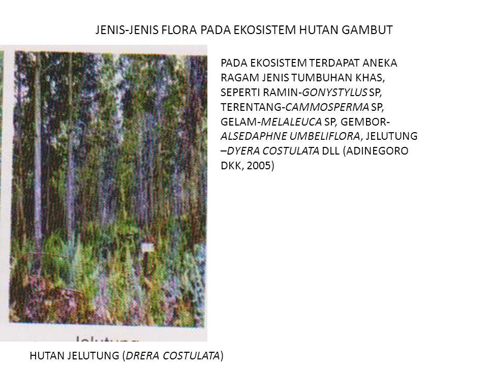 JENIS-JENIS FLORA PADA EKOSISTEM HUTAN GAMBUT