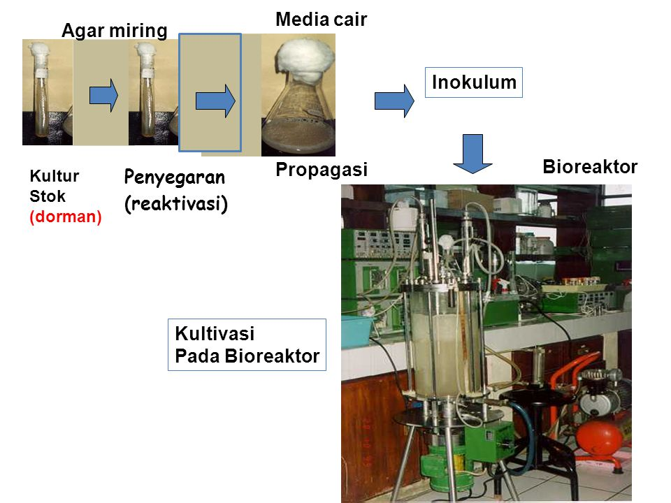 Media cair Agar miring Inokulum Bioreaktor Propagasi Penyegaran