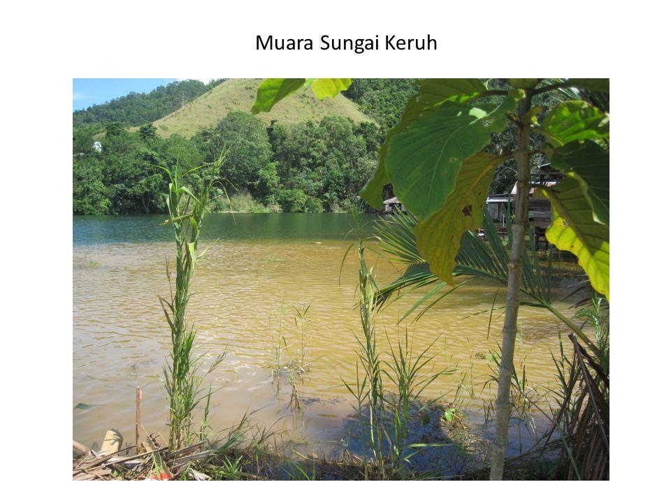 Muara Sungai Keruh