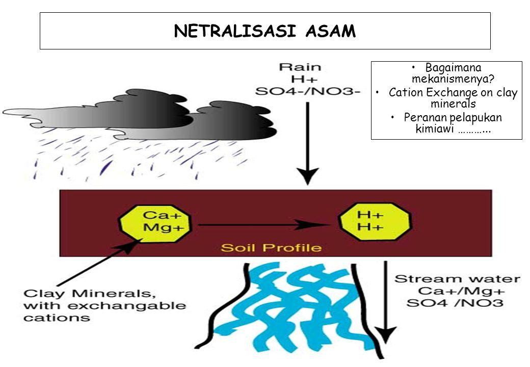 NETRALISASI ASAM Bagaimana mekanismenya