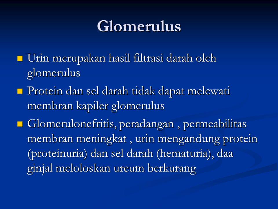 Glomerulus Urin merupakan hasil filtrasi darah oleh glomerulus