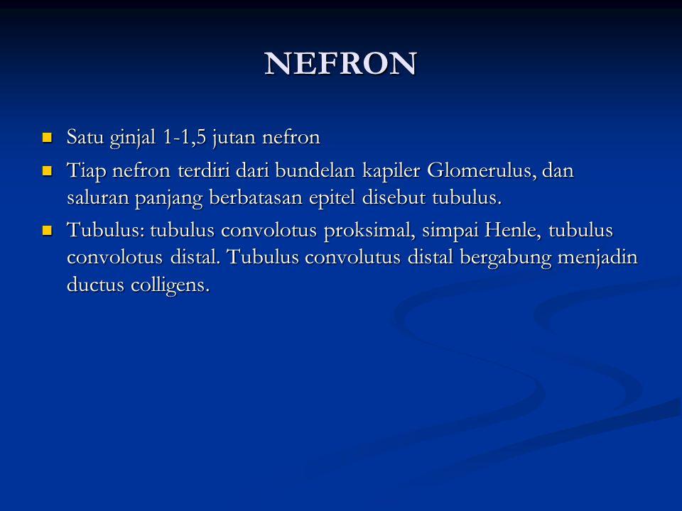 nefron Satu ginjal 1-1,5 jutan nefron