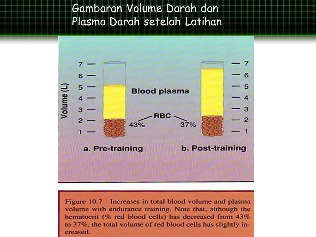 Gambaran Volume Darah dan Plasma Darah setelah Latihan