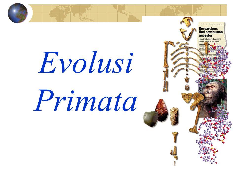 Evolusi Primata