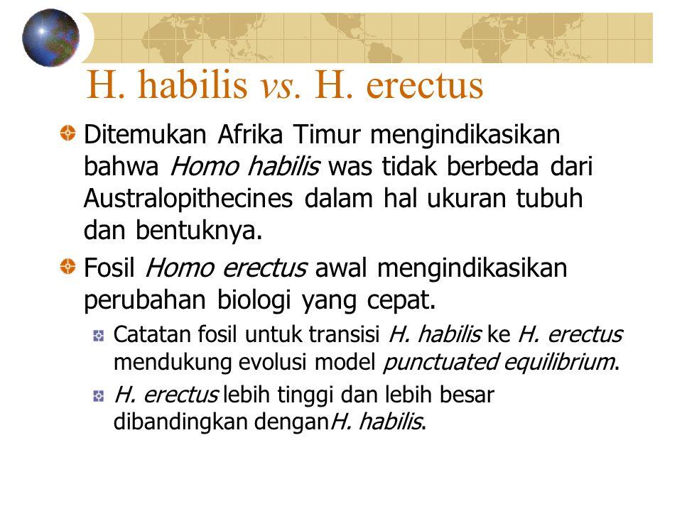 H. habilis vs. H. erectus