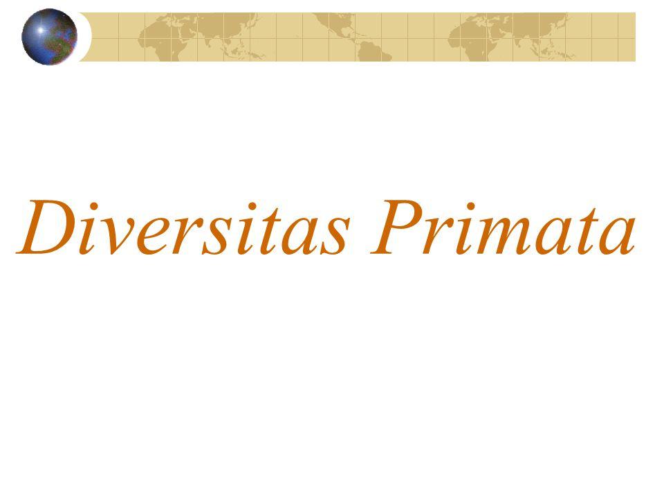 Diversitas Primata