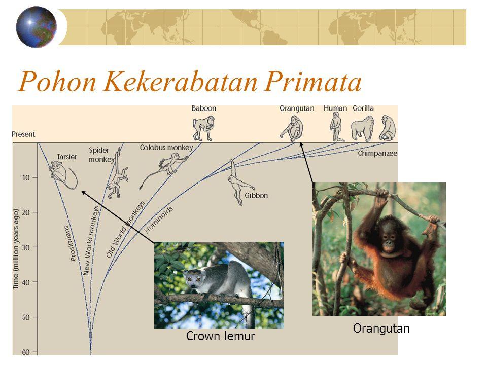 Pohon Kekerabatan Primata