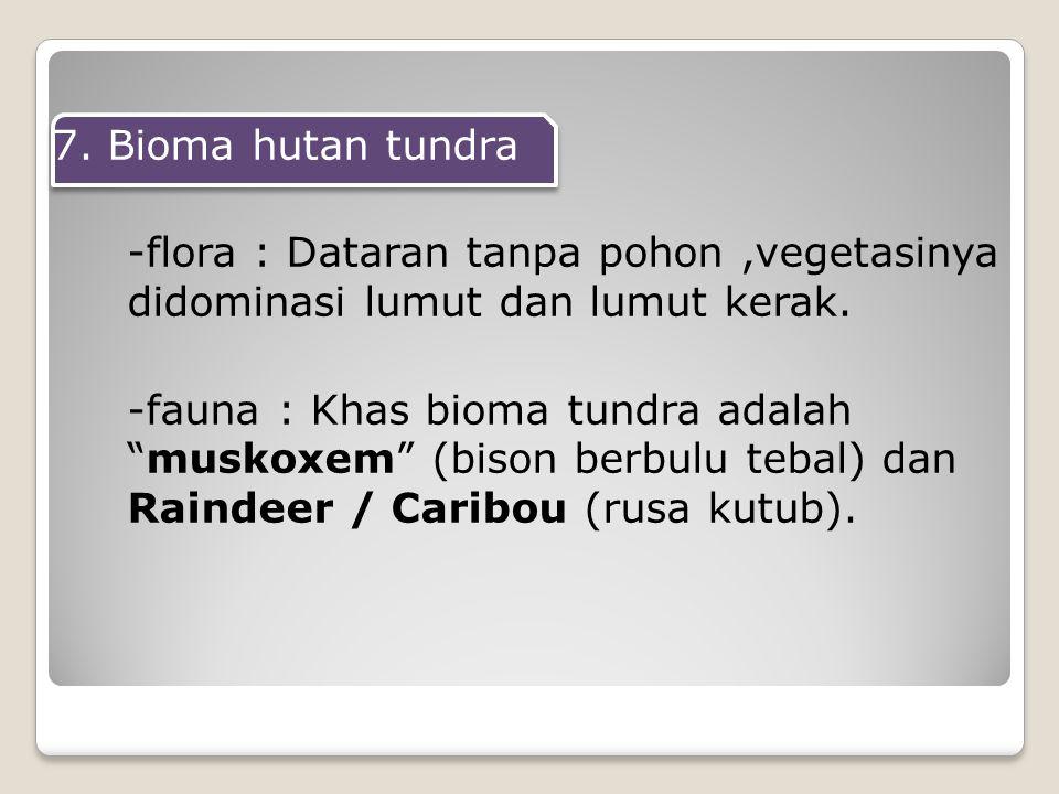 7. Bioma hutan tundra -flora : Dataran tanpa pohon ,vegetasinya didominasi lumut dan lumut kerak.