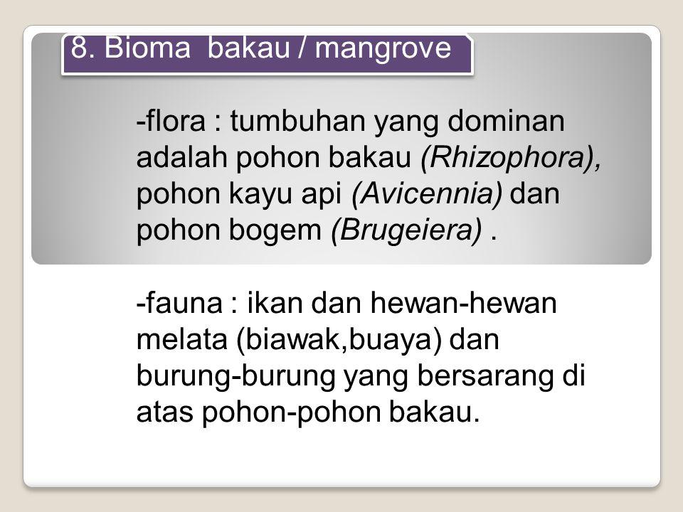 8. Bioma bakau / mangrove