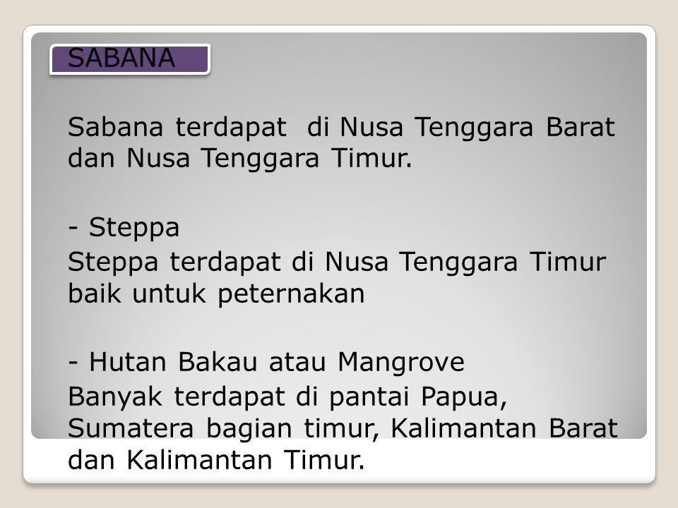 SABANA Sabana terdapat di Nusa Tenggara Barat dan Nusa Tenggara Timur