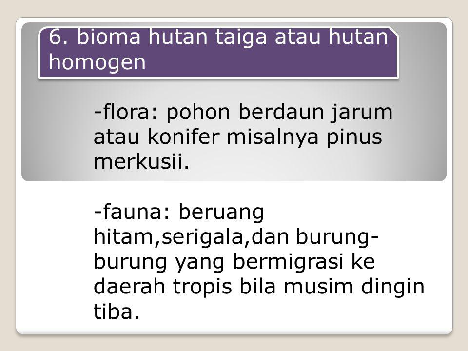 6. bioma hutan taiga atau hutan homogen