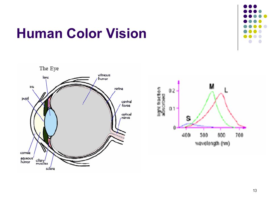 Human Color Vision