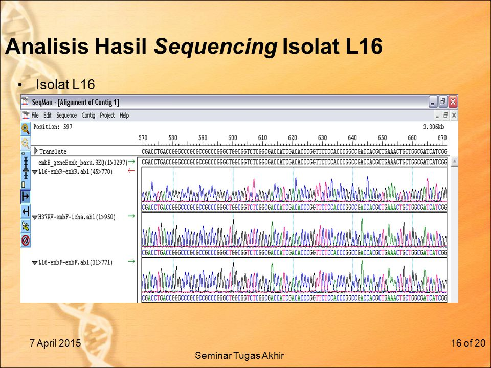 Analisis Hasil Sequencing Isolat L16