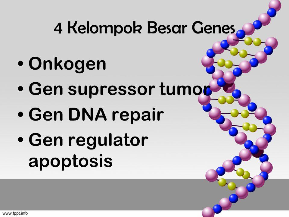 4 Kelompok Besar Genes Onkogen Gen supressor tumor Gen DNA repair Gen regulator apoptosis