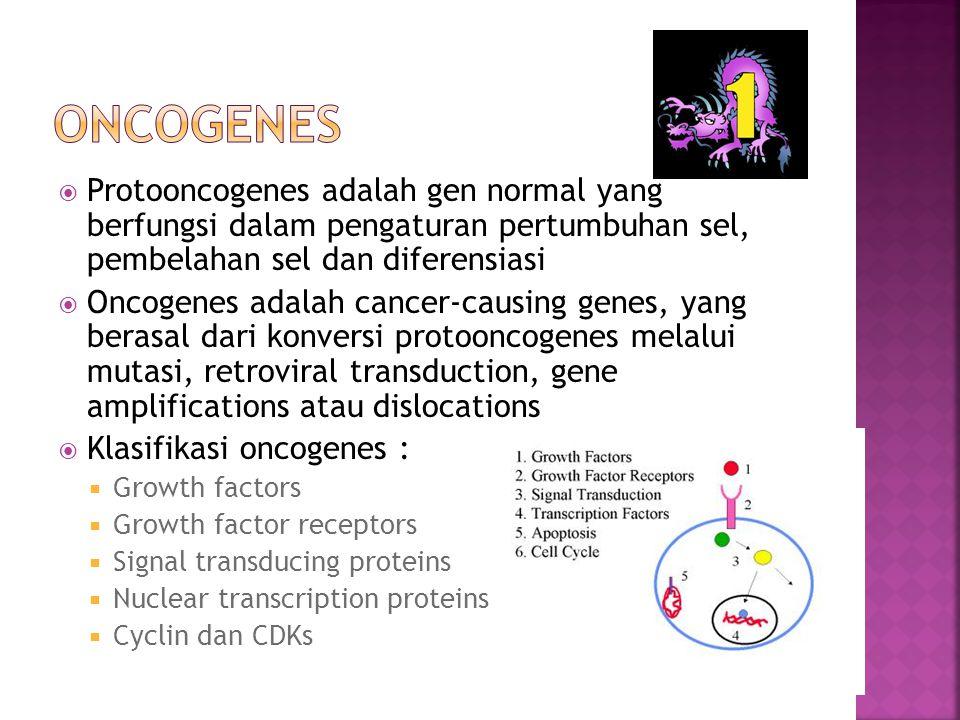 Oncogenes Protooncogenes adalah gen normal yang berfungsi dalam pengaturan pertumbuhan sel, pembelahan sel dan diferensiasi.