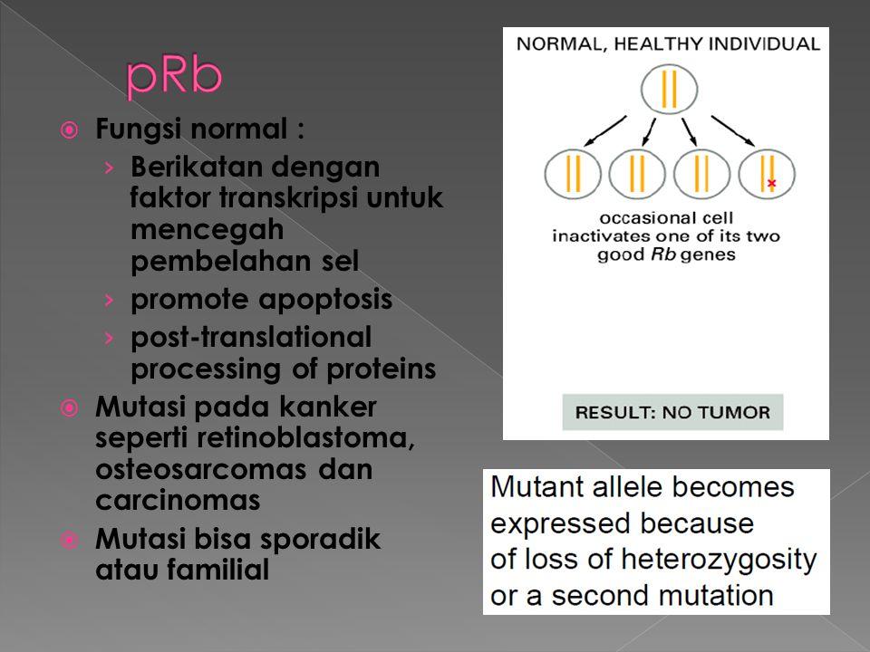 pRb Fungsi normal : Berikatan dengan faktor transkripsi untuk mencegah pembelahan sel. promote apoptosis.