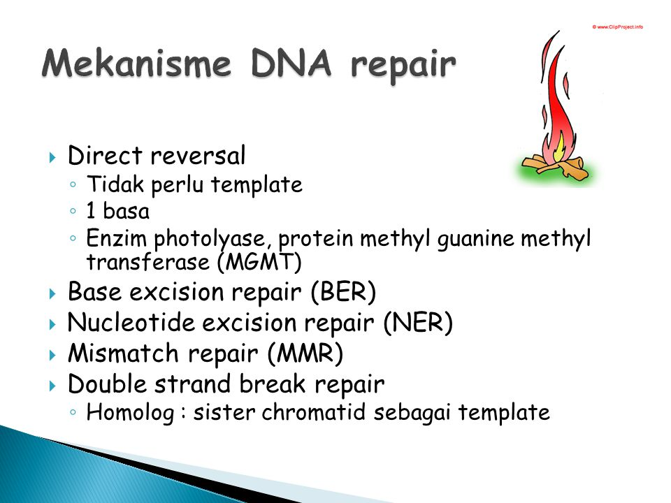 Mekanisme DNA repair Direct reversal Base excision repair (BER)