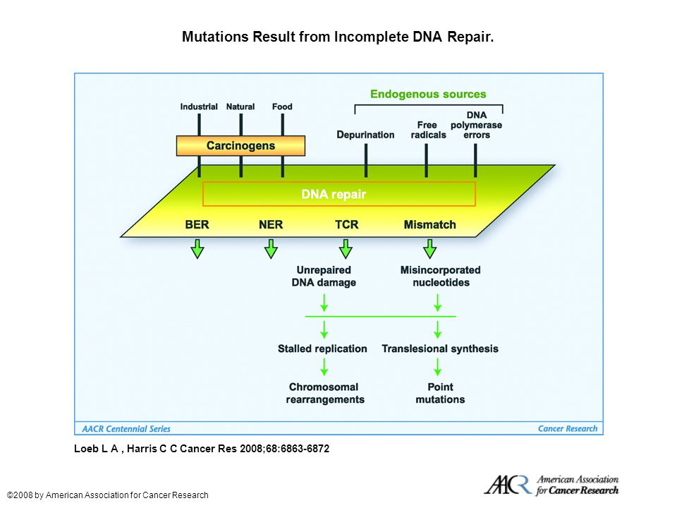 Mutations Result from Incomplete DNA Repair.