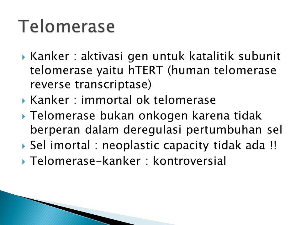 Telomerase Kanker : aktivasi gen untuk katalitik subunit telomerase yaitu hTERT (human telomerase reverse transcriptase)