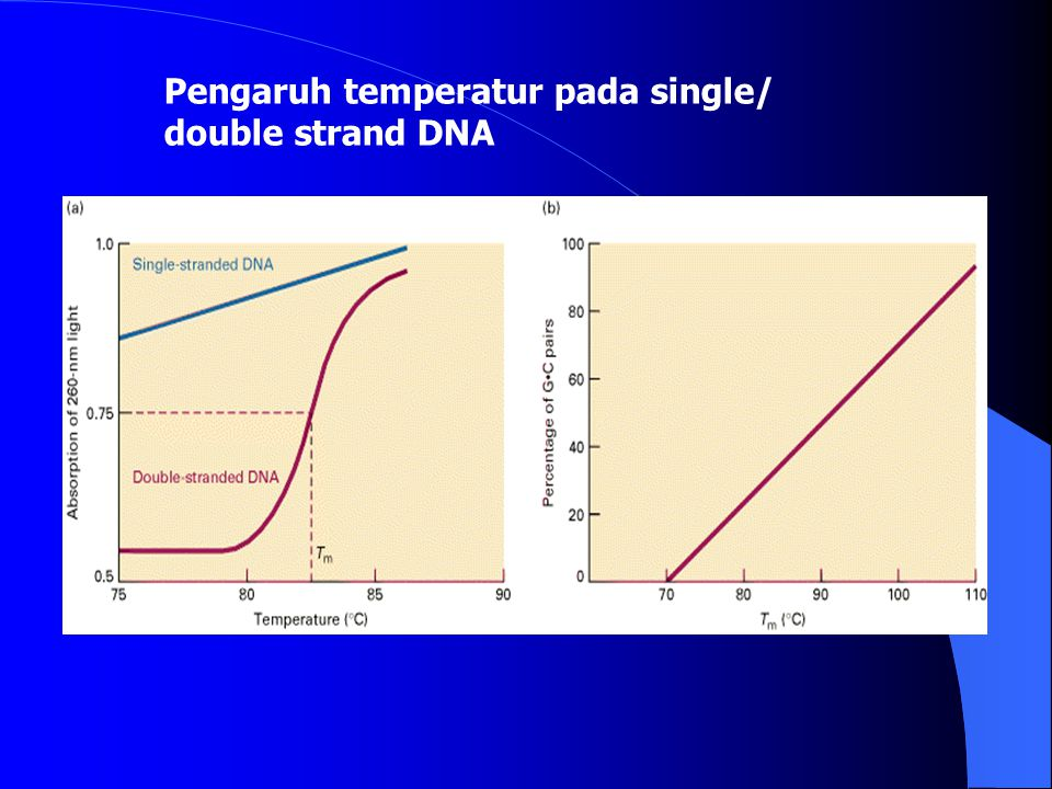 Pengaruh temperatur pada single/ double strand DNA