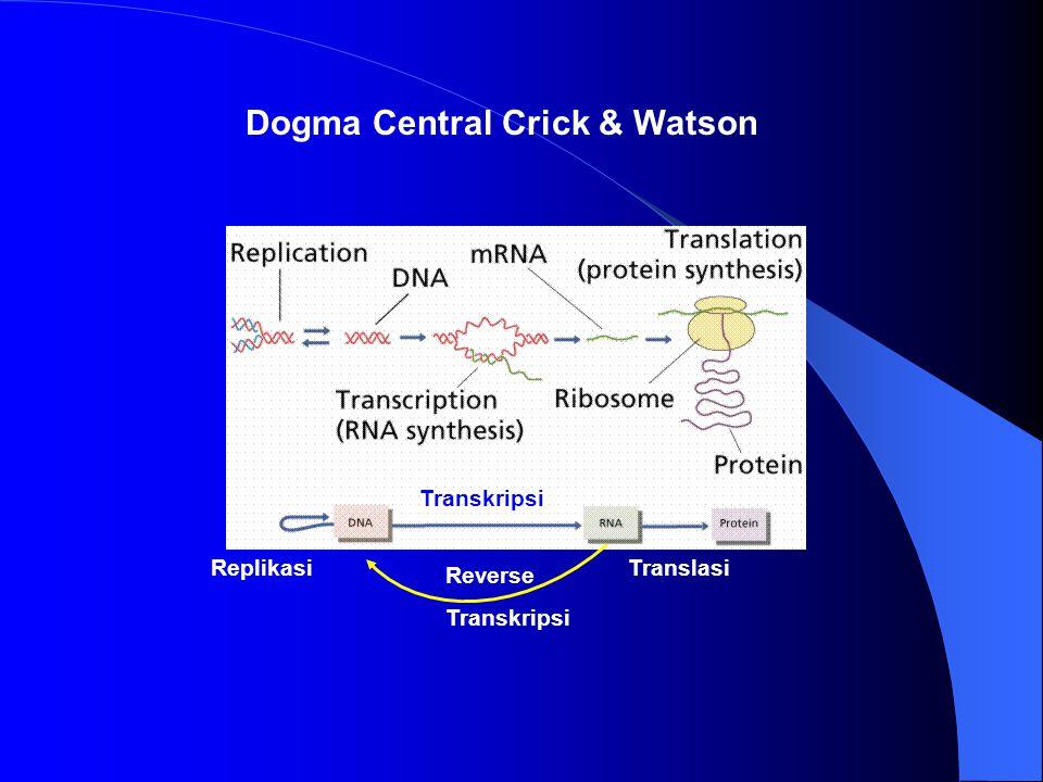 Dogma Central Crick & Watson