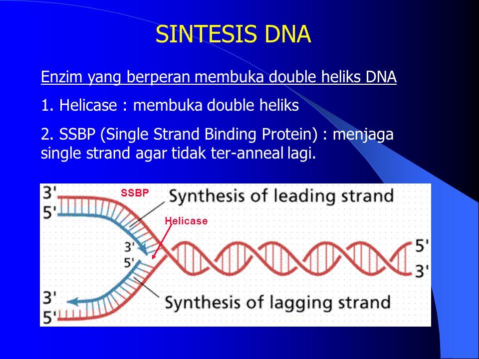 SINTESIS DNA Enzim yang berperan membuka double heliks DNA