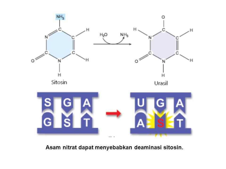 Asam nitrat dapat menyebabkan deaminasi sitosin.