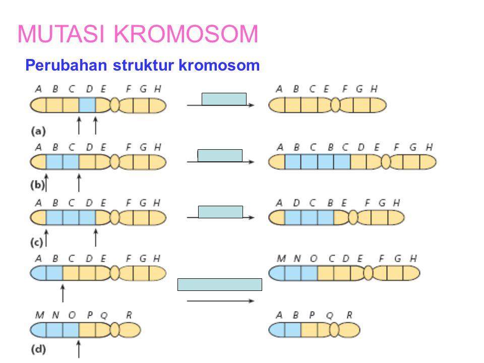 MUTASI KROMOSOM Perubahan struktur kromosom