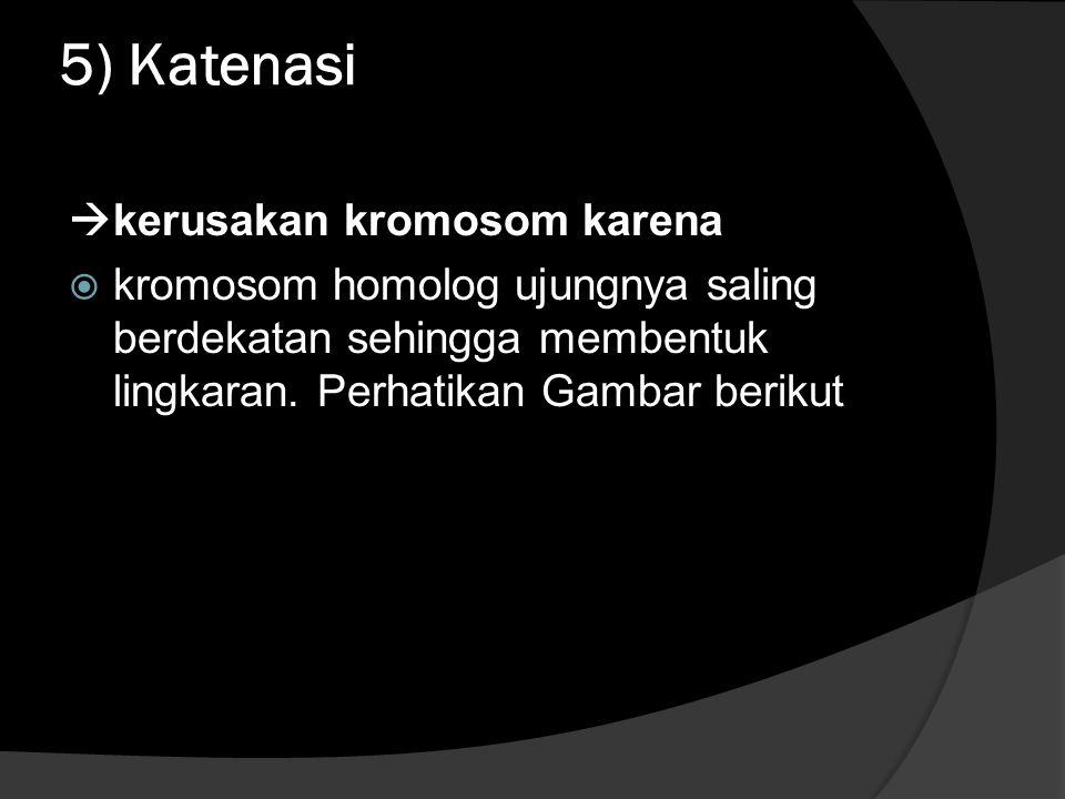 5) Katenasi kerusakan kromosom karena