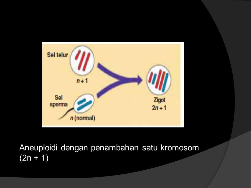 Aneuploidi dengan penambahan satu kromosom (2n + 1)